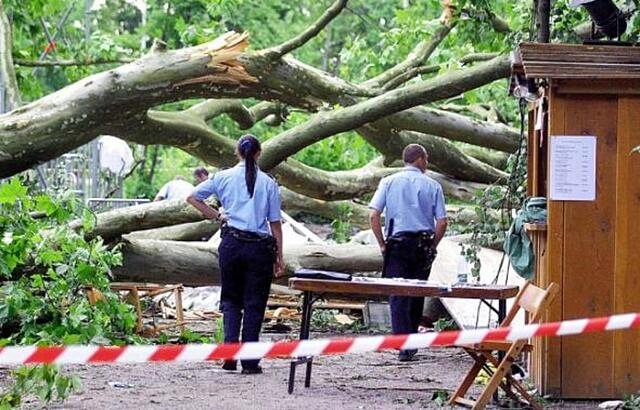 Tree Collapses on Tent Due to Extreme Winds