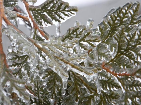 Freezing Rain on Tree
