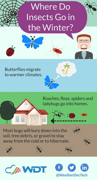 Where Do Insects go in the Winter Infographic