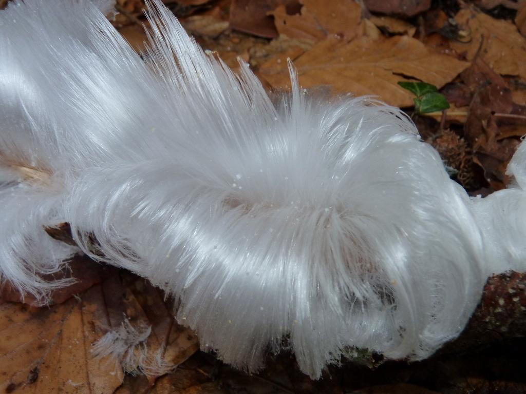 Hair Ice