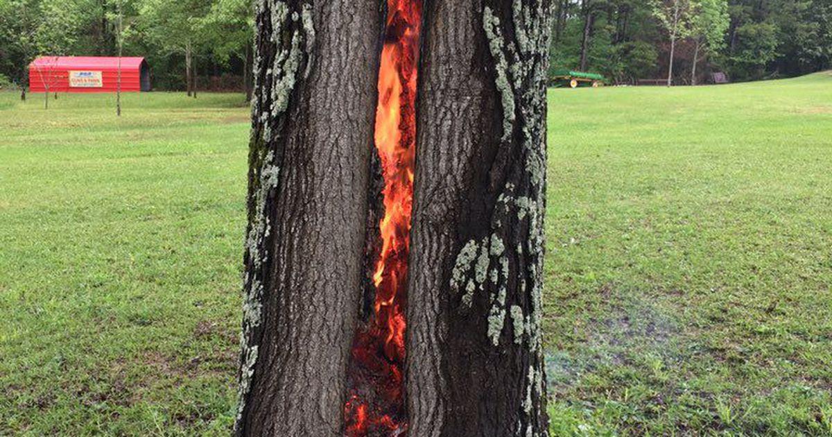 Tree on Fire After Lightning Strike