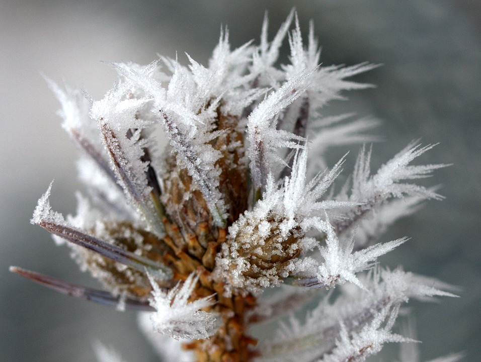 Soft Rime on Vegetation
