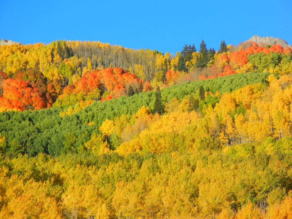 Chasing Leaves and Fall Weather – Using WDT WeatherOps Mobile App