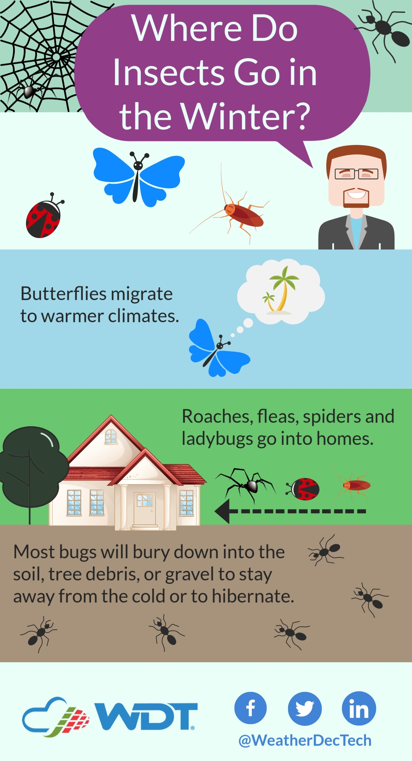 Spoiler Alert: Cold Weather Doesn't Actually Kill Bugs