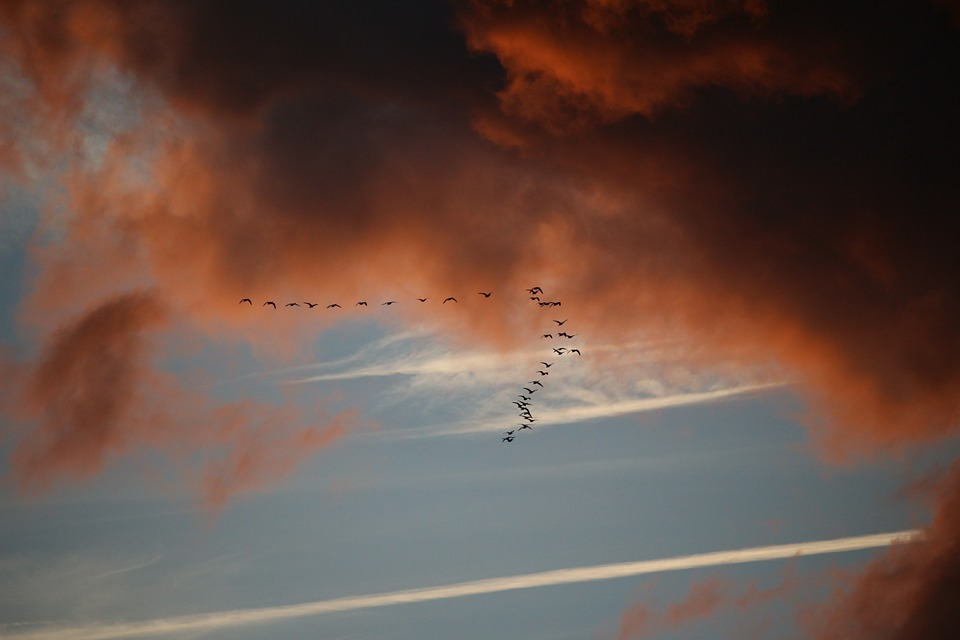 The Weather Cues that Signal Bird Migration