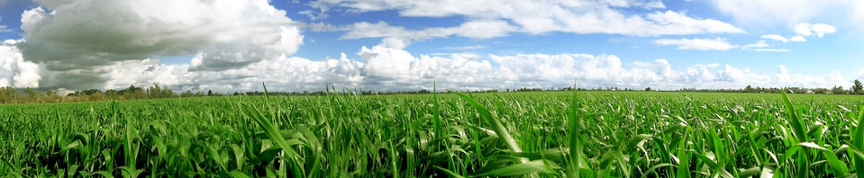 There are 87 varieties of corn seed. Wanna know why?