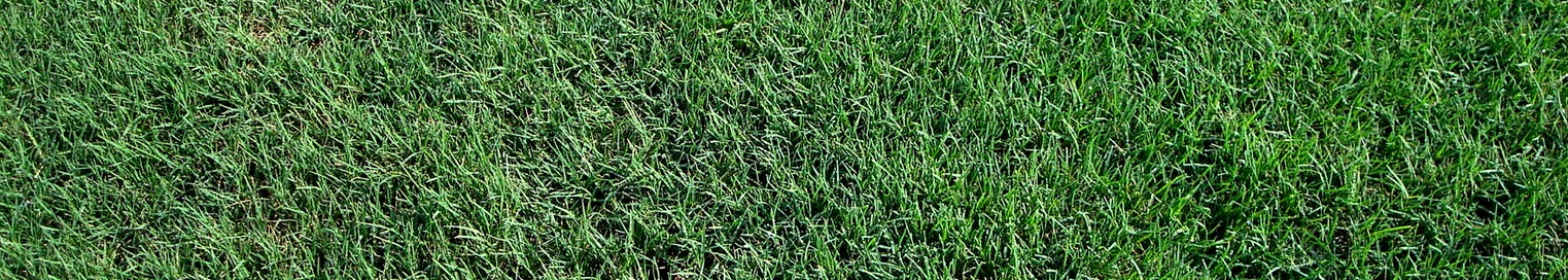 Weather dictates when to overseed, not convenience