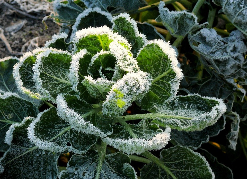 Ready to Plant? When to Expect the Last Freeze